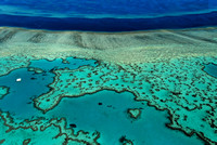 Lovely Heart, Great Coral Reef, Australia